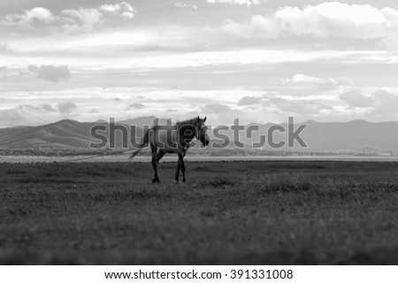 A lone horse on a summer field Selective focus on the horse. Blurred plants at foreground. Aged photo. Black and white. - stock photo