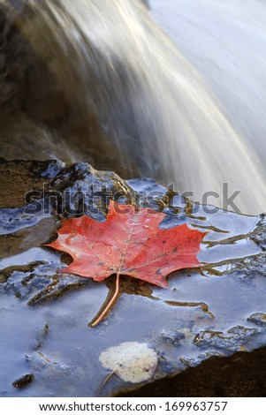 A lone Maple Leaf sits on the edge of Ocqueoc Falls during the autumn season Michigan. Onaway, Michigan, USA.
