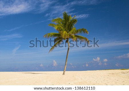 A lone palm tree on a white sandy beach in the Bahamas - stock photo