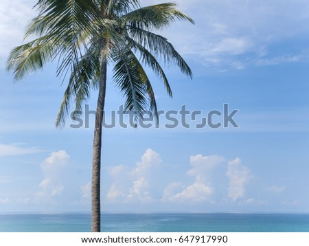 A lone palm tree stands tall near the ocean under a blue sky on Ko Kut island in east Thailand
