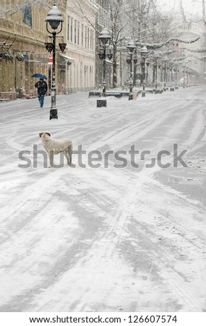 A lone person walking a deserted city street, during heavy snowfall, observed by the pariah dog. - stock photo