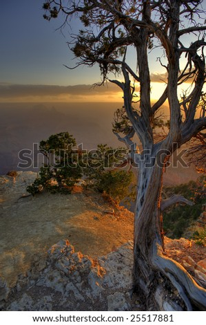 A lone pine tree clings to life on the canyon edge.