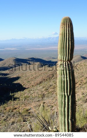 A lone Saguaro sentinel overlooks a desert valley in vertical perspective