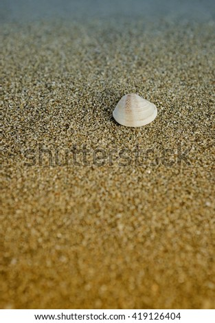 A lone seashell on sand seashore