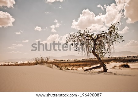 A lone tree in the sand with some grass near by.