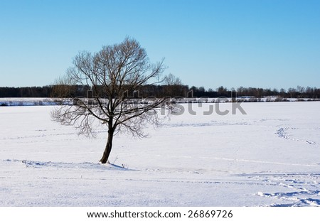 A lone tree on a winter lakeside
