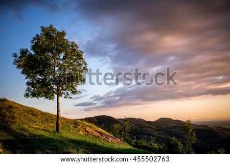 a lone tree on the slope of a mountain at sunset