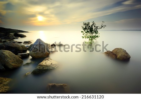 A lone tree partially submerged in the water during sunset . Long exposure . Image contain certain grain or noise ( the tree has a little movement because of long exposure effect ) - stock photo