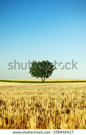 A lone tree stands alone in a field surrounded by wheat stubble and a blue sky on a farm.