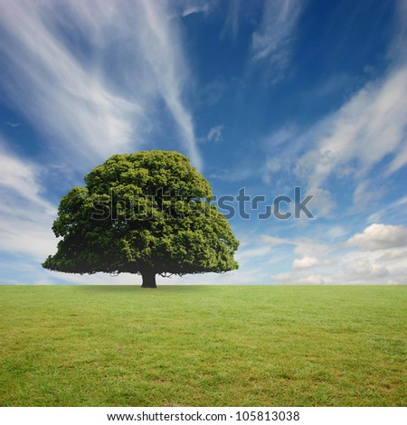 A Lone Tree with Blue Sky and Grass