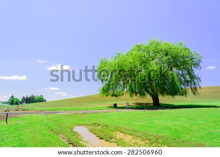 A lone tree with rolling hills in background at Palouse area, Whitman county, Washington State, US. A sunny day in farmland of eastern Washington. - stock photo