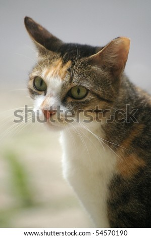 A lonely cat with sharp eyesight - stock photo