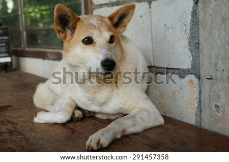 a lonely dog in thailand - stock photo