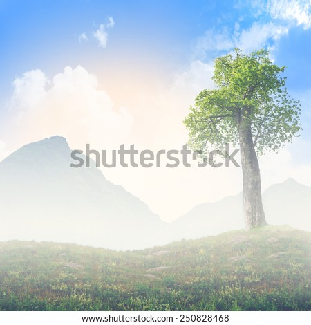 A lonely old tree in the mountains against the backdrop of the picturesque landscape. art . - stock photo