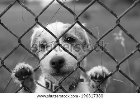 A lonely sad dog behind wire fence, lost freedom, black and white - stock photo