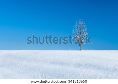 A lonely tree covered in frost and ice crystals after a frozen fog lifted on a cold snowy Christmas morning. - stock photo