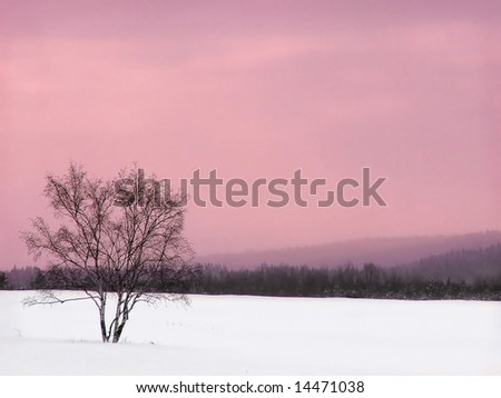 A lonely tree in the winter - stock photo