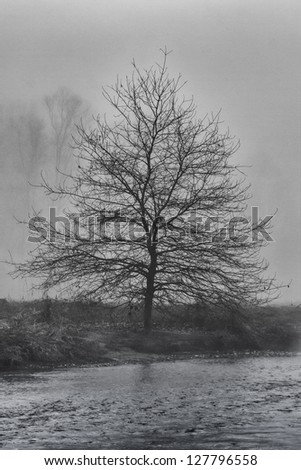A lonely tree on a misty morning in Italy - stock photo