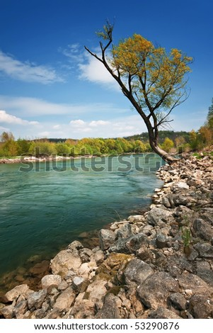A lonely tree overlooking the river