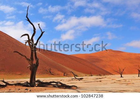 A lonely tree skeleton at Deadvlei near Sossusvlei, Namibia - stock photo