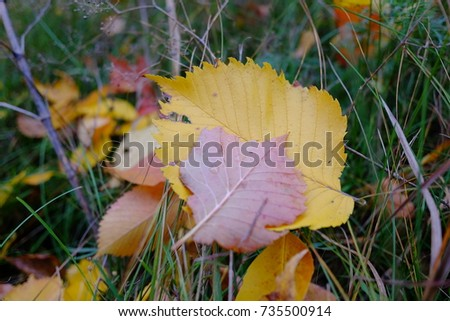 a lot of autumn leaves, colorful leaves