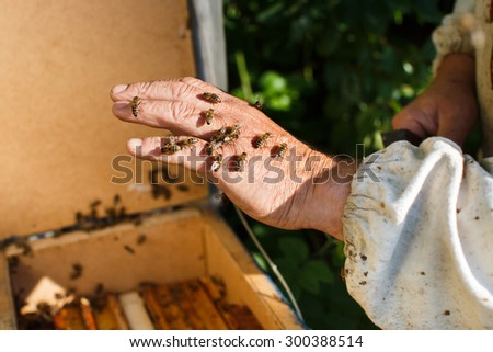 A lot of bees are sitting on apiarist's hand on the beehive background, in the garden, close up