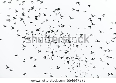 a lot of birds in the sky, a flock of birds