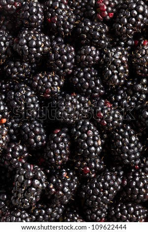 a lot of blackberries. studio shot.