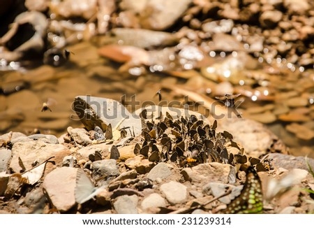 a lot of butterfly at Kaeng Krachan National Park, Thailand - stock photo