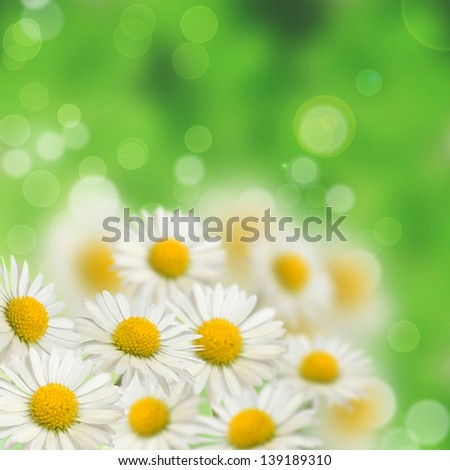 A lot of daisies on the blurred background