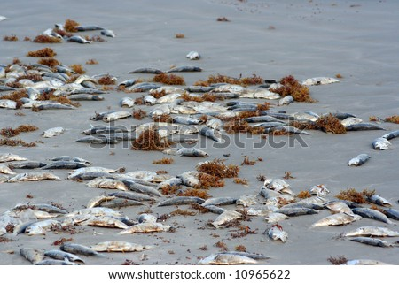A lot of dead fish on the beach - stock photo