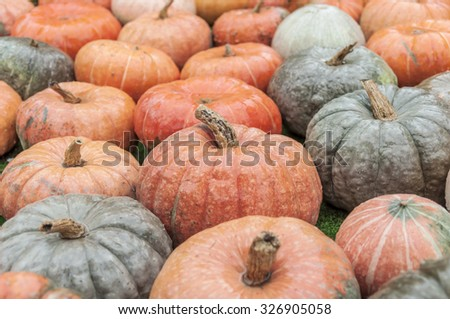A lot of different colorful autumnal pumpkins on rainy day - stock photo