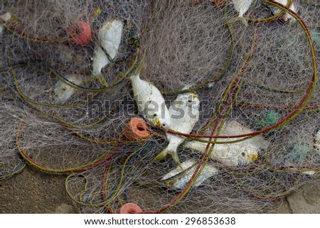 A lot of Fish in fish net. Just caught a lot of fish in a boat. - stock photo