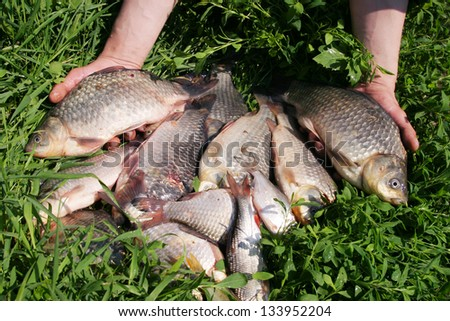 a lot of fresh fish on the grass - stock photo