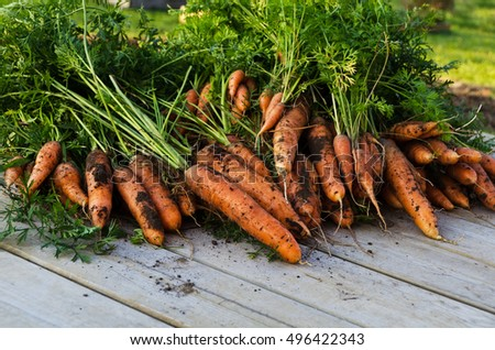 a lot of fresh harvested carrots on a wooden table