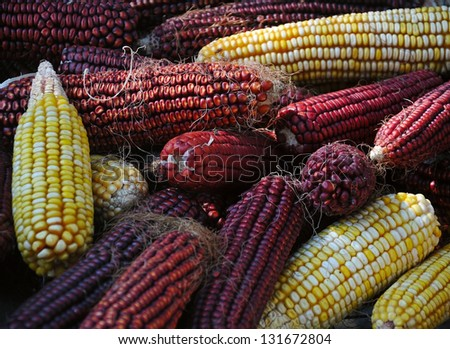 a lot of magenta and yellow corncobs in a basket