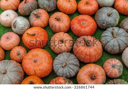 A lot of orange autumnal pumpkins - stock photo