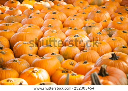 A lot of pumpkins on Halloween, seasonal autumn decorative background - stock photo