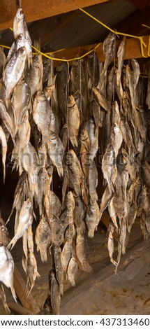 A lot of salted fish dried in the attic - stock photo