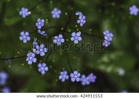 a lot of small blue flowers photographed in soft focus