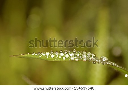 a lot of water droplets on the grass leaf in the garden