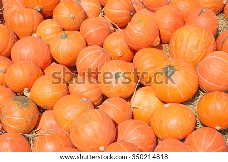 A lots of pumpkins, selective focus.