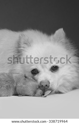 A love of mother, black and white dogs  - stock photo