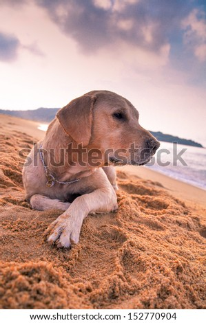 A lovely dog in the sand - stock photo
