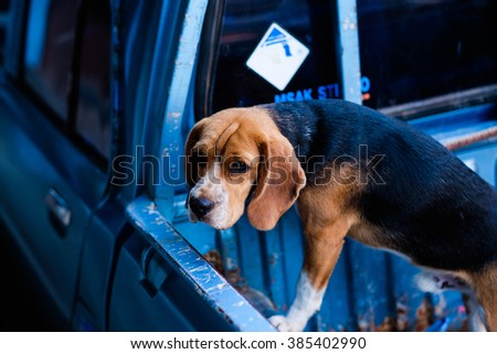 A lovely dog on a blue car