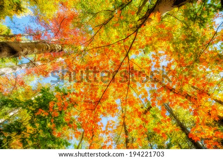 A low angle view of light shining through autumn leaves on trees in a forest.