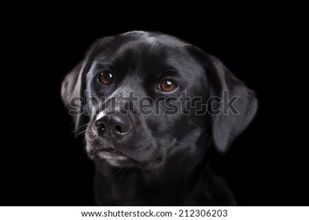 A low key image of a black dog