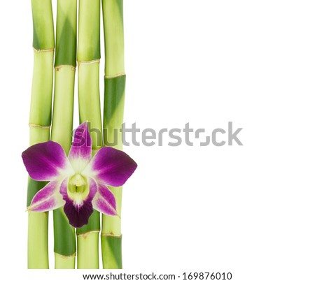 A lucky bamboo stalks and purple orchid flower isolated on a white background. (Ribbon dracaena, Belgian evergreen, Ribbon plant) - stock photo