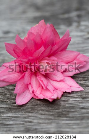A macro detail of a pink bloom head - stock photo