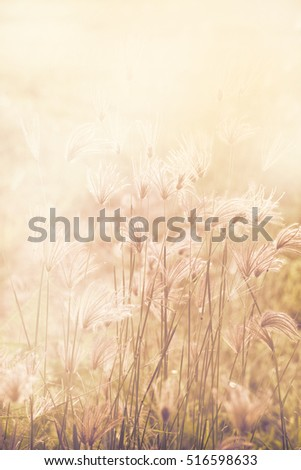 A macro grass flower and light in the morning.